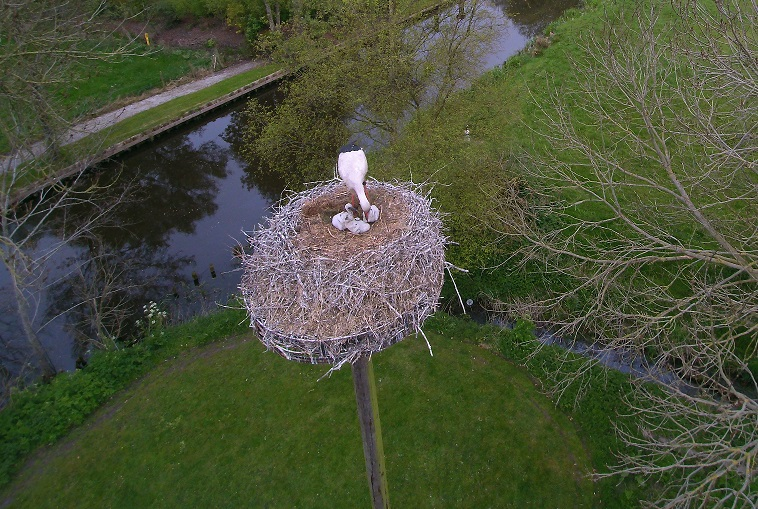 Ooievaars nest LaDure